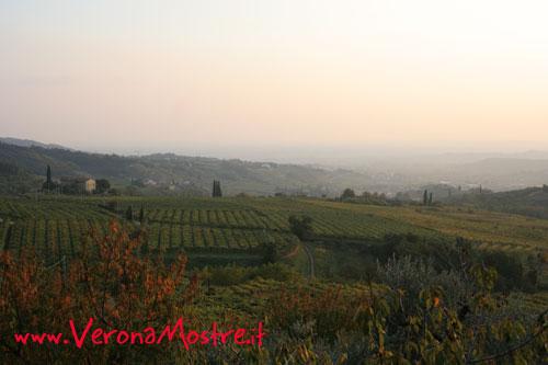 Le colline della Valpolicella, ultime propaggini dei monti Lessini, le prealpi veronesi